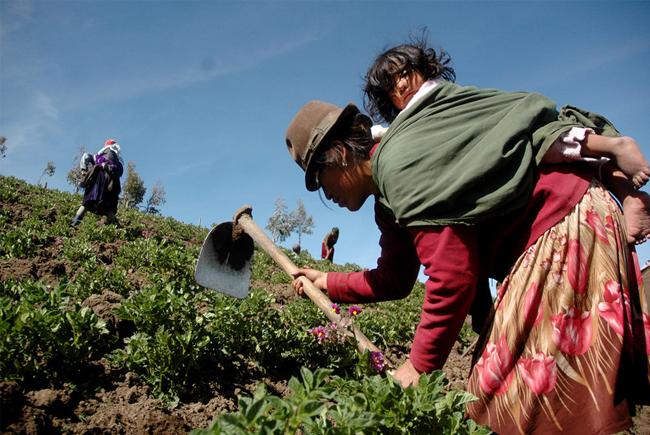 Objectiu 4: Sistemes alimentaris sostenibles