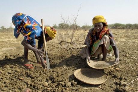 Dos mujeres recogiendo semillas en nidos de termitas.