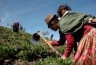 (c) Ricardo Landetta/ Oxfam