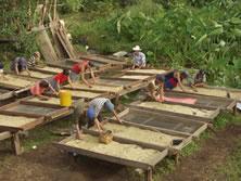Grupo de trabajadores seleccionando granos de café. (c) Oxfam